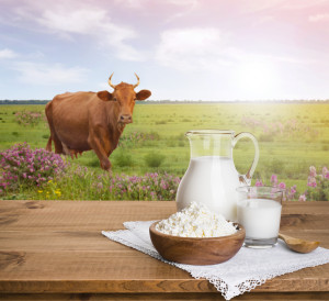 Milk jug and cottage cheese on meadow with cow background