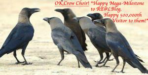 Crow Choir 500K
